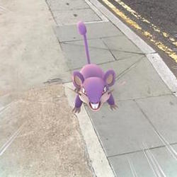 Rattata is one of the more common Pokémon along with Ekans, Weedle, Pidgey, Spearow, and the dreaded Zubat